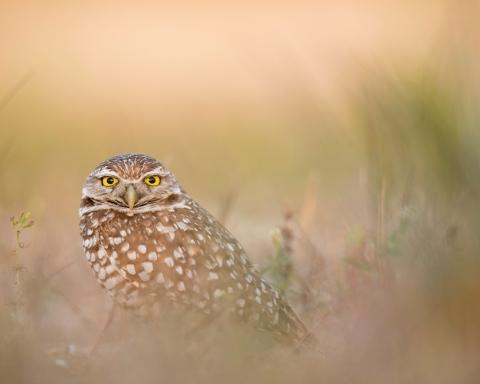 Lintuharrastuksen aloittaminen | Pöllö pusikossa.