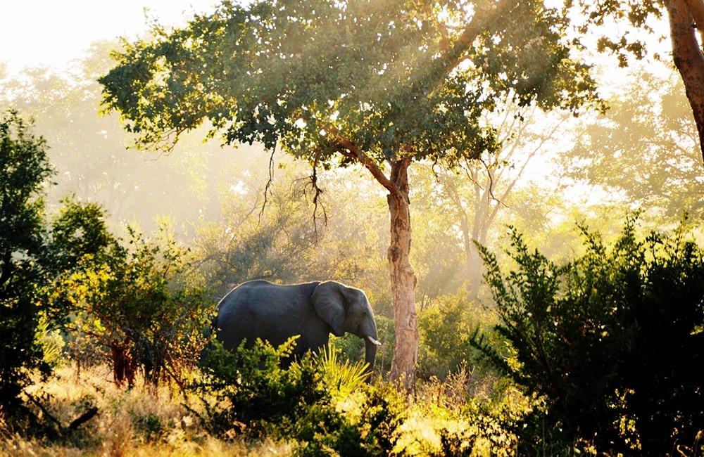 Safari Afrikka | kokemuksia