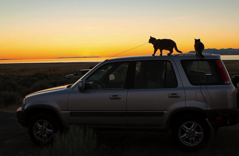 kissa matkapahoinvointi | Kissa auringonlaskussa auton katolla.