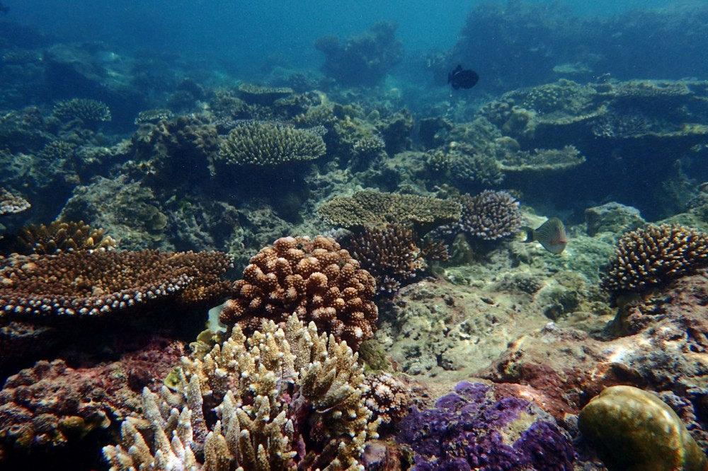 Pulau Weh | Koralleja